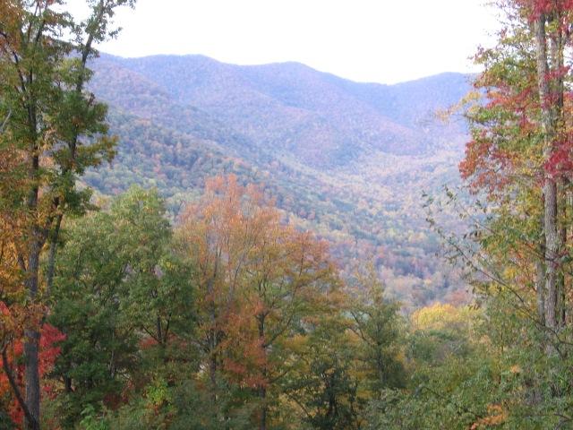 Fall 2010 011