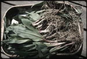 a mess of ramps