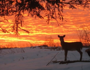 sunrise with deer