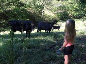 Olivia cows