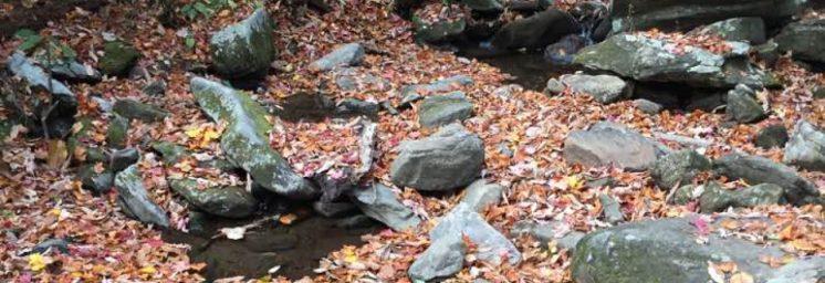 cropped-creek1.jpg