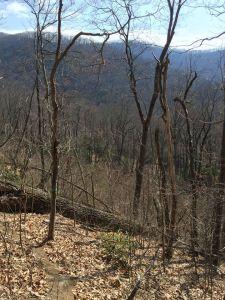 trail-tree