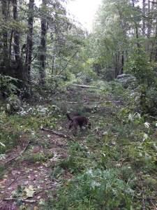storm damage2