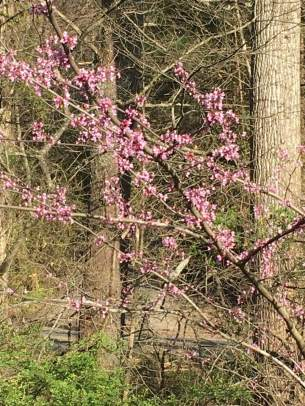 A sure sign of redbud winter.