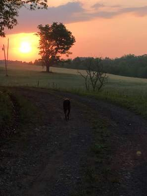 Early morning walk.