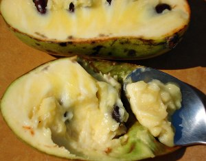 Pawpaws-with-spoon