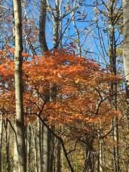 leaf orange